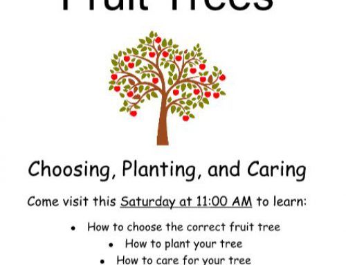 Succeed with Your Fruit Trees with Ace