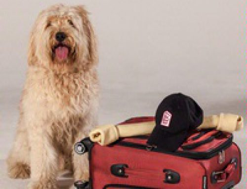 Red Roof Inn VIP Pass – Pets Stay Free!